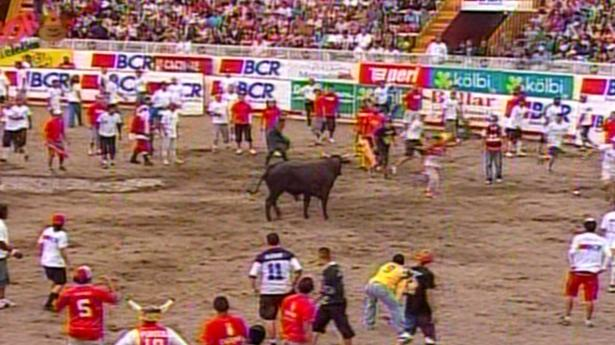 The bullring is a staple at traditional summer festivals, where men usually run in front of and away from charging bulls.