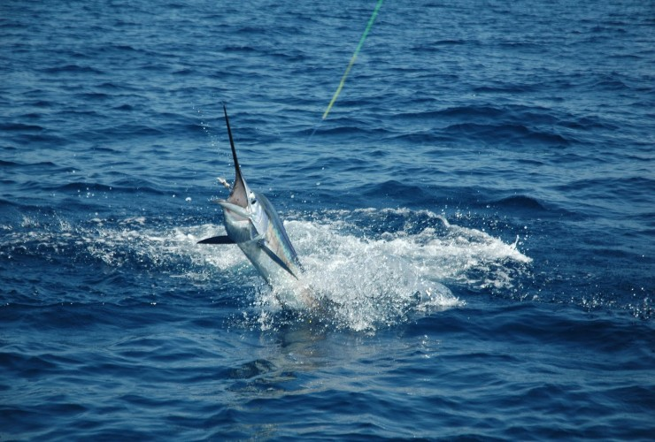 Quepos to host the sportfishing world championship finals for Costa rica fishing