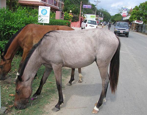 samara_horses