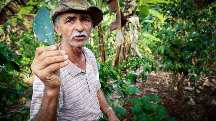 Farmer Ademar Serrano Abarca, 65, has devoted a quarter of his land to forest, and grows coffee and more than 15 different food crops on the rest. He says pest infestations are drastically lower on his land