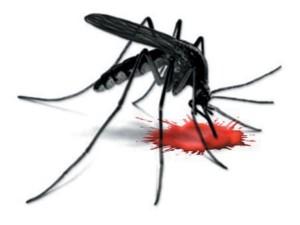 448019-dengue-1349588183-441-640x480