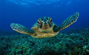 green-seaturtle-1-1q68zk6