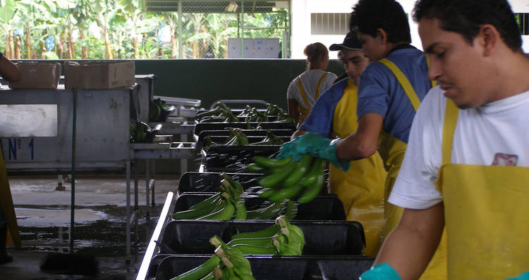 Banana Factory Workers in Costa Rica. Photo: Flickr