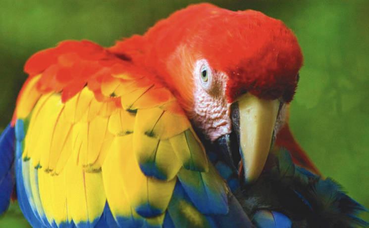 Costa Rican Santa Ana Wildlife
