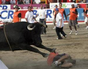 zapote-bull-fights-costa-rica-christmas-460x360