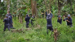 The rebels say the eradication of illicit crops is not the way forward
