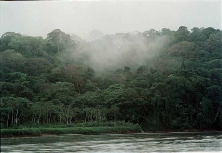 Costa Rica forest