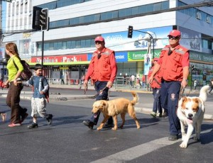 Just a few months ago, Jimmy (right) was one of 200,000 stray dogs in the municipality of Maipú in the Chilean capital of Santiago. Today, he's part of the first canine security brigade in the country not belonging to the police or Army. (Gustavo Ortiz for Infosurhoy.com)