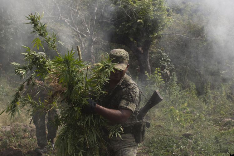 Mexico Drug War Cartel Country