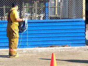 El animal fue controlado por los bomberos de Ciudad Neily, Corredores, con ayuda del personal de mantenimiento del hospital. Fue trasladado hasta el río Corredores, para ser liberado.   FREDDY PARRALES.