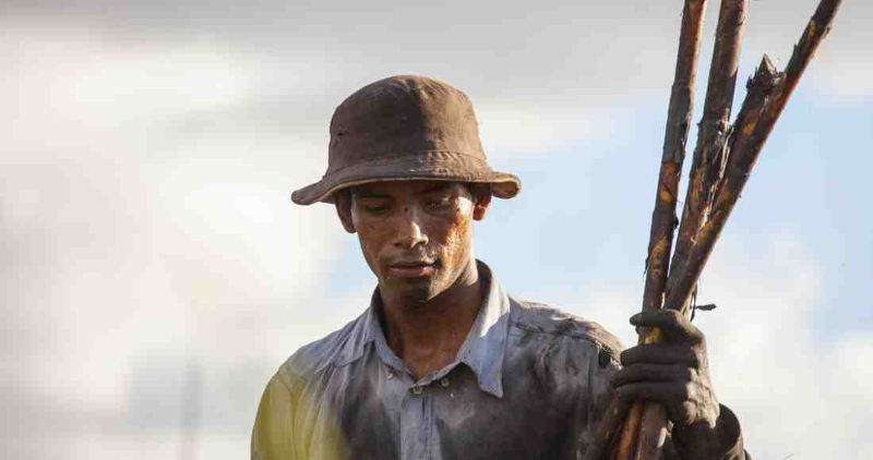 Sugar Cane worker in Guanacaste. Photo by Luciano Capelli - www.facebook.com/luciano.capelli1