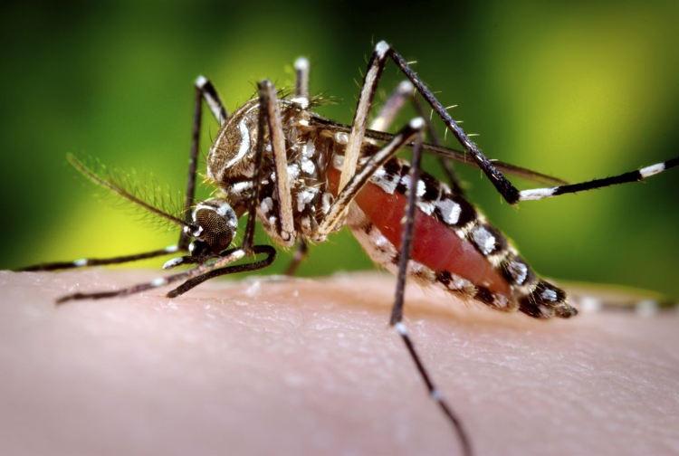 Costa Rica Health Confirms New Case of Chikungunya