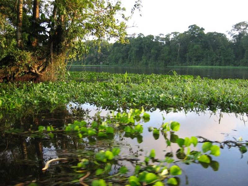 The 47,000-acre coastal preserve Tortuguero National Park contains a network of waterways only navigable by boat.