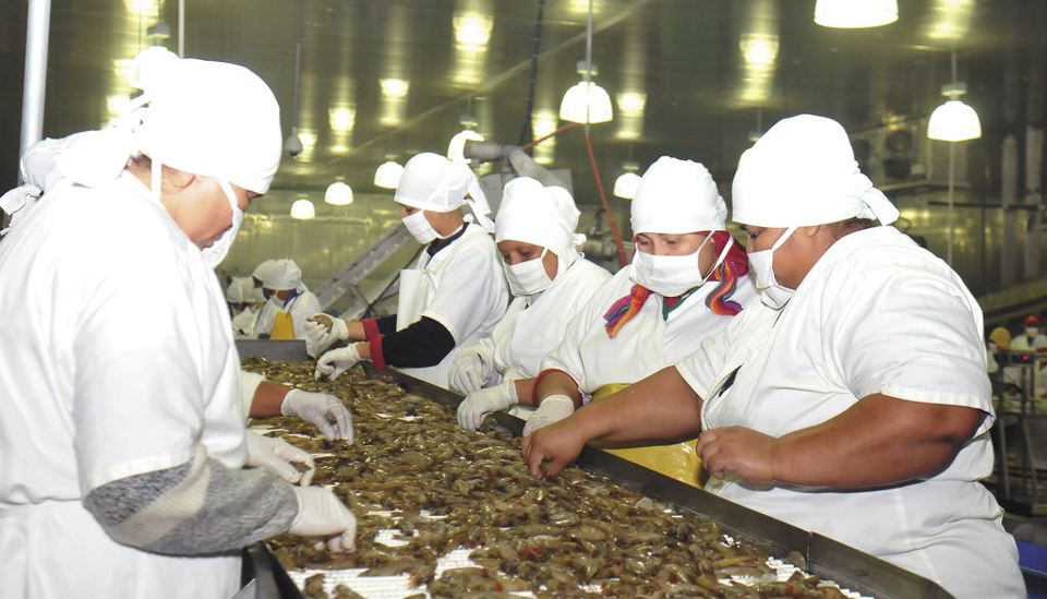 Nicaraguan workers processing shrimp. Photo: Laprensa.com.ni