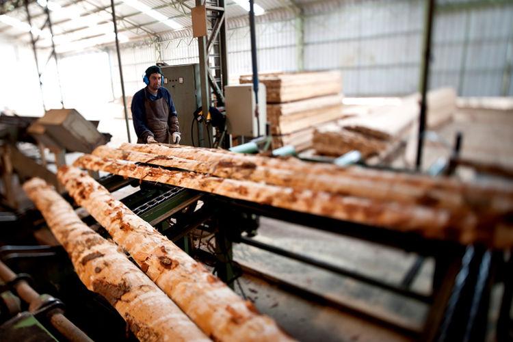 madera-Chile-Infor-ONF-Maderas_de_Centroamerica_ELFIMA20141107_0059_16