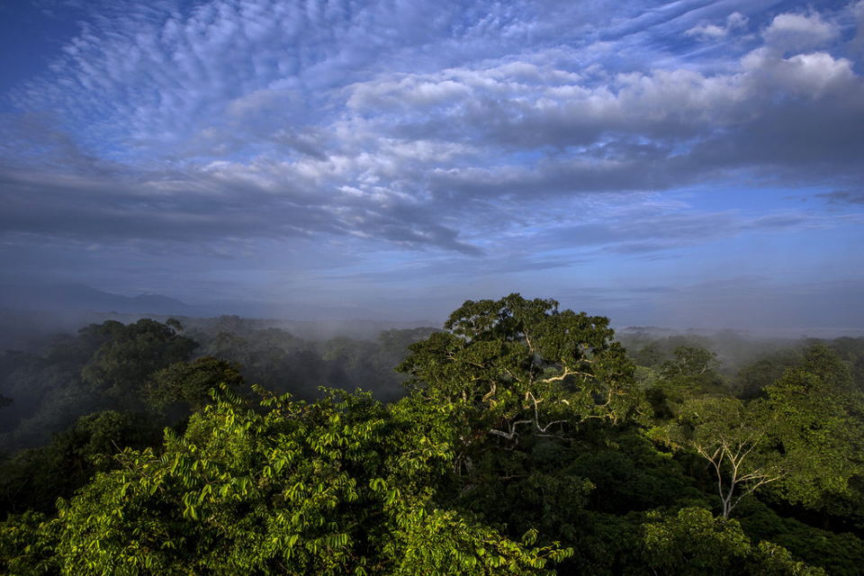 The canopy of the rain forest in Costa Rica, as seen from an observation tower at La Selva Biological Station. Costa Rica has become famous for its efforts to conserve the forest. Adriana Zehbrauskas for The New York Times