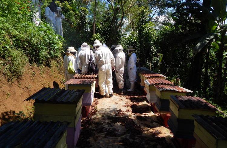Cámara Nacional de Fomento de la Apicultura (National Chamber of Development of Beekeeping) has 400 affiliates.