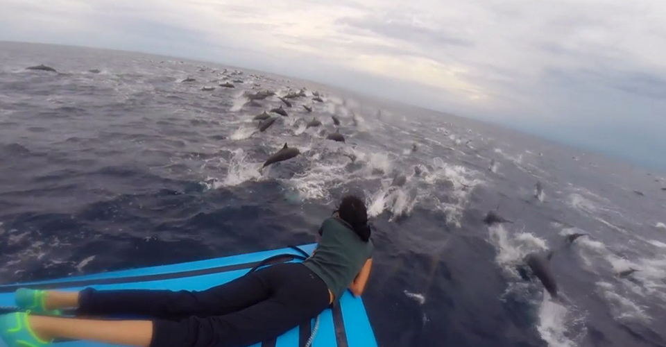 delfines-full