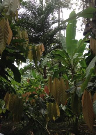 The banana fields of Talamanca.Stephanie Daniels