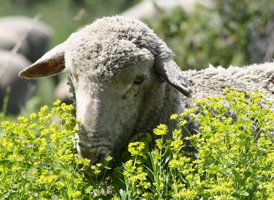 non-toxic-weed-control-mark-eisenbeil
