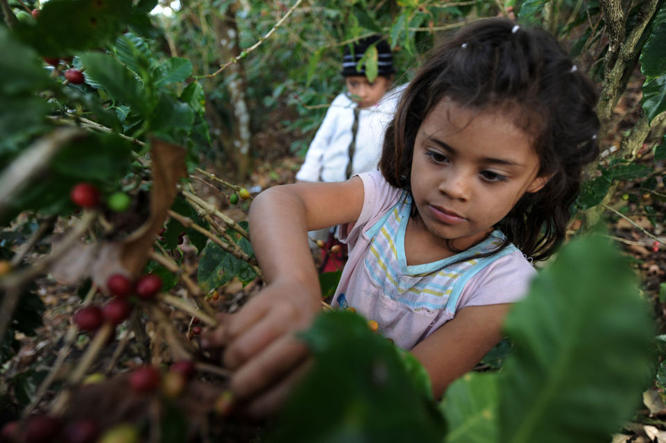 child labor in guatemala essays 10 horrifying examples of modern-day child slavery kristance but child slavery is unanimously the worst form of child labor that exists and is.