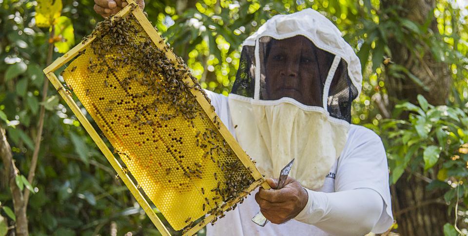 apicultura_hojancha_guanacaste_2_crespo