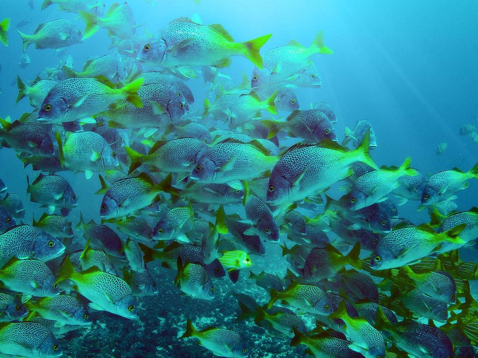 cano-island-biological-reserve-940x705