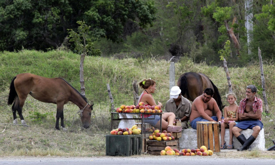 A family of farmers selling mangoes wait for customers at the side of a road on the outskirts of Havana. Photograph: Desmond Boylan/Reuters/Corbis