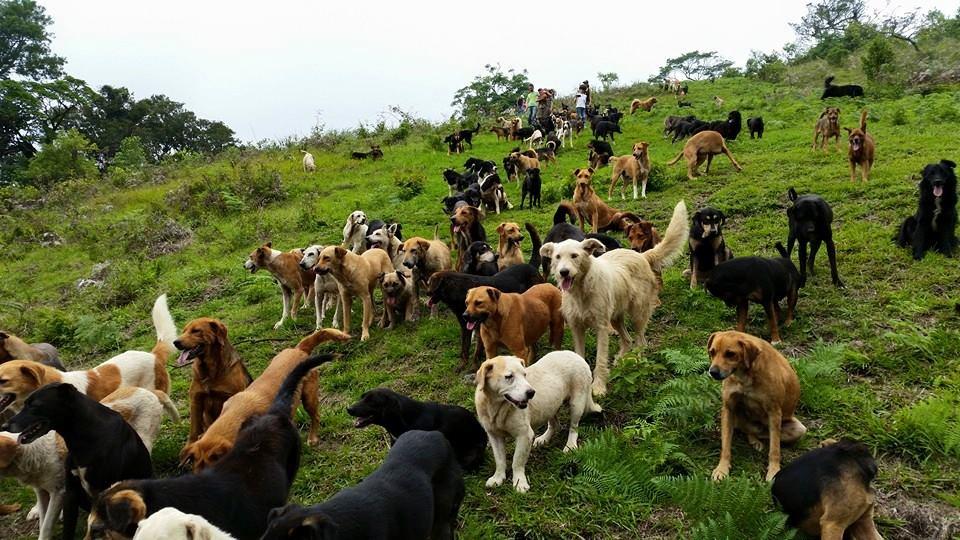 Refuge Territorio de Zaguates 11402832_1607778686160048_366658686451836593_n