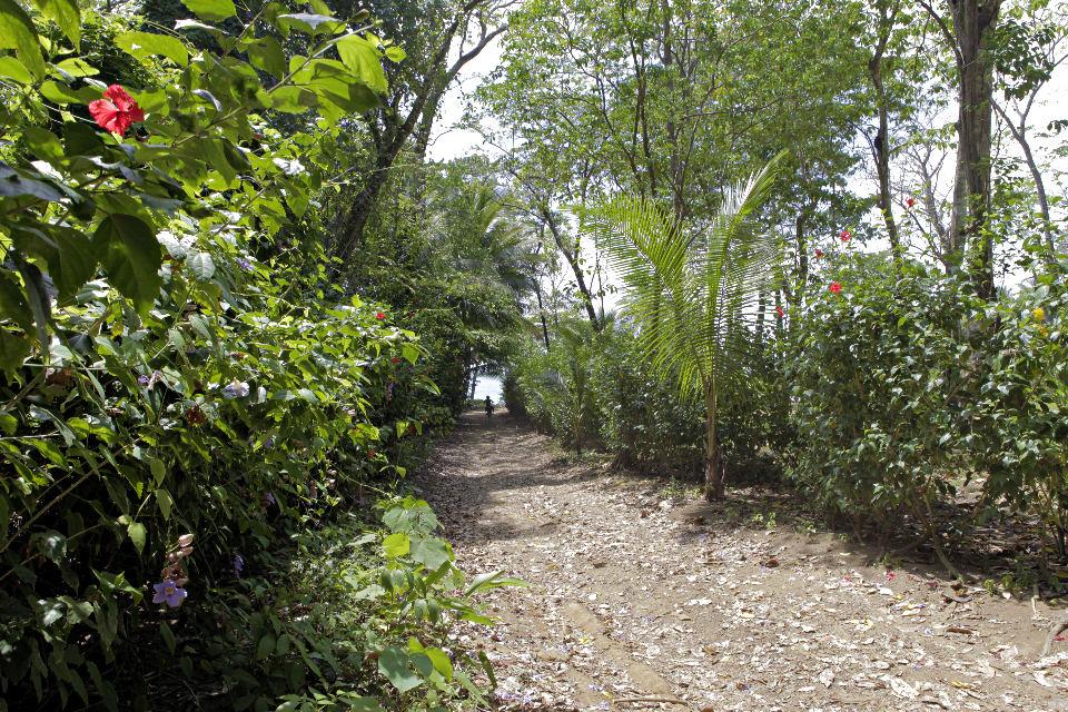 Osa-Cosat-Rica-Hiking-JoeBaur