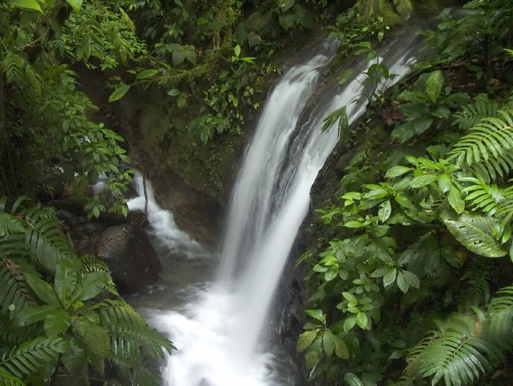 Waterfall at Monteverde Reserve