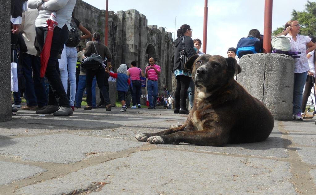 Stray dog near the ruins of Cartago. Photo: http://cbowmancr.weebly.com/photo-essay.html