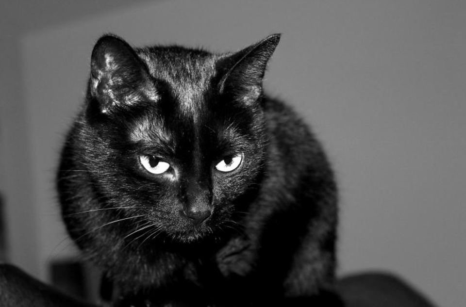 Why do some superstitions linger, from fear of black cats to Friday the 13th or Martes 13?