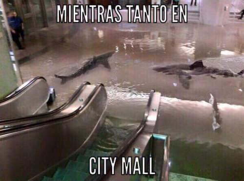 citymall-humou3