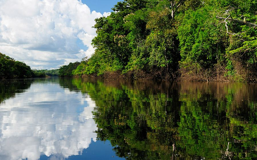 The Amazon rainforest covers 2.1 million square miles of land (AP)