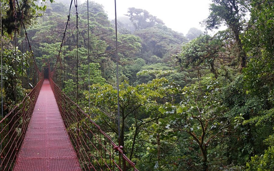 Costa Rica's cloud forests have walkways and zip wires (AP)