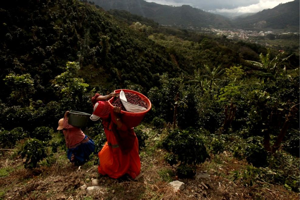 workers from Panama, carry baskets of ripe coffee up a steep hill at Ricardo Calderón Madrigal's farm in Costa Rica. Photo from erikajschultz.com