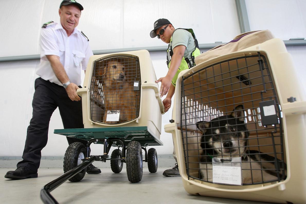 pets-on-a-plane