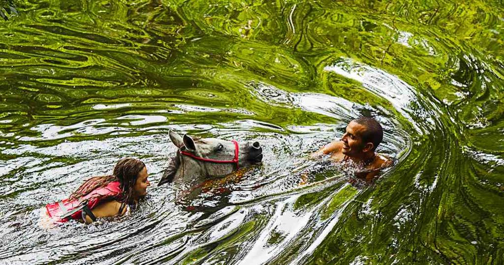 """Jonathan """"Chama"""" Corrales, a tour guide from La Cruz, encourages one of the horses before a swim session. Foto por Ariana Crespo"""