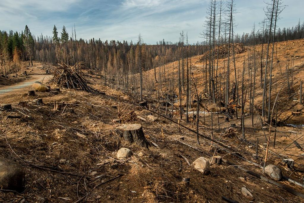 Is deforestation to blame for the areas around the world experiencing large-scale droughts? Scientists are starting to believe so. Photo for illustrative purposes