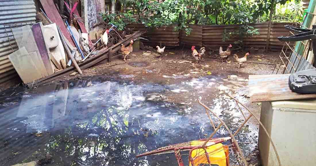 The drain from a washing machine is also the watering hole for hens in a Nicoya neighborhood. It is a clear example of an Aedes aegypti mosquito breeding site. Photo by Ariana Crespo