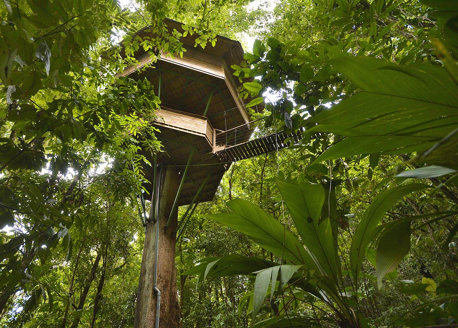 The tree house named El Castillo at Finca Bellavista © Jeremy Papasso / Finca Bellavista