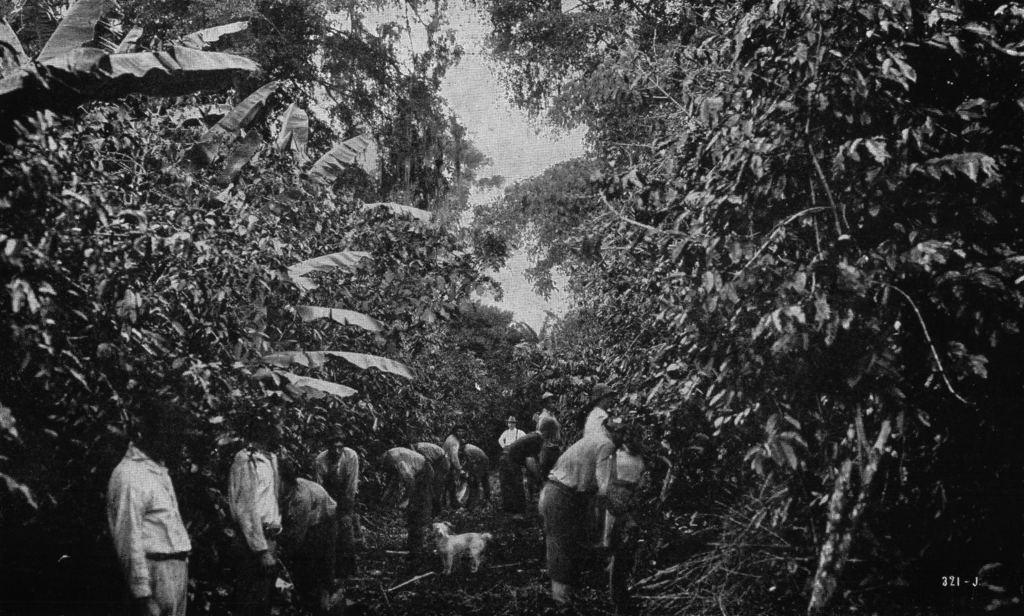 Early plantation workers in Costa Rica