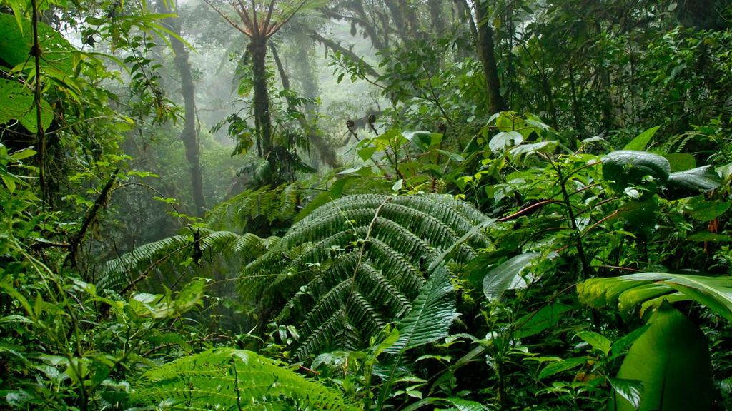 Costa Rica's beautiful green cloud forest scenery