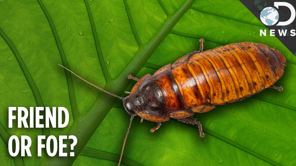 Why Do Cockroaches Even Exist? Roaches are more than just pests that crawl around our homes.