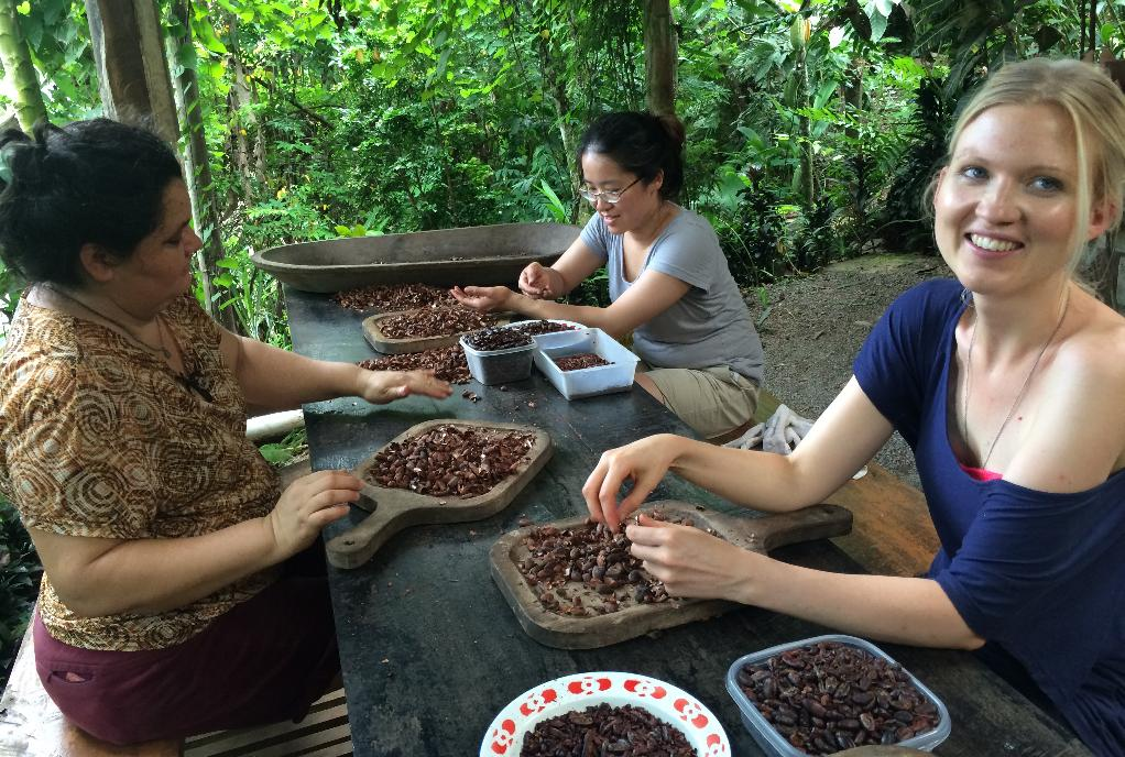 Foreigners lending a helping hand to shuck cocoa in a small farm located in Matastal (south of Puriscal) Costa Rica. Photo by Rico, QCostarica