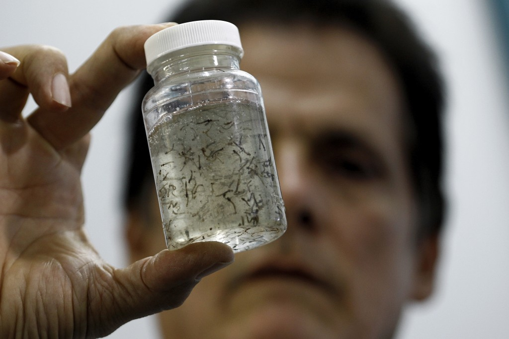 Health technician Willian Araya shows the cultivated Aedes aegypti mosquito larvae at a laboratory in Ministry of Health in San Jose, Costa Rica on Jan. 27. The Health Ministry confirmed on Tuesday, the first case of the Zika virus in the country, according to local media. Photo by Juan Carlos Ulate/Reuters