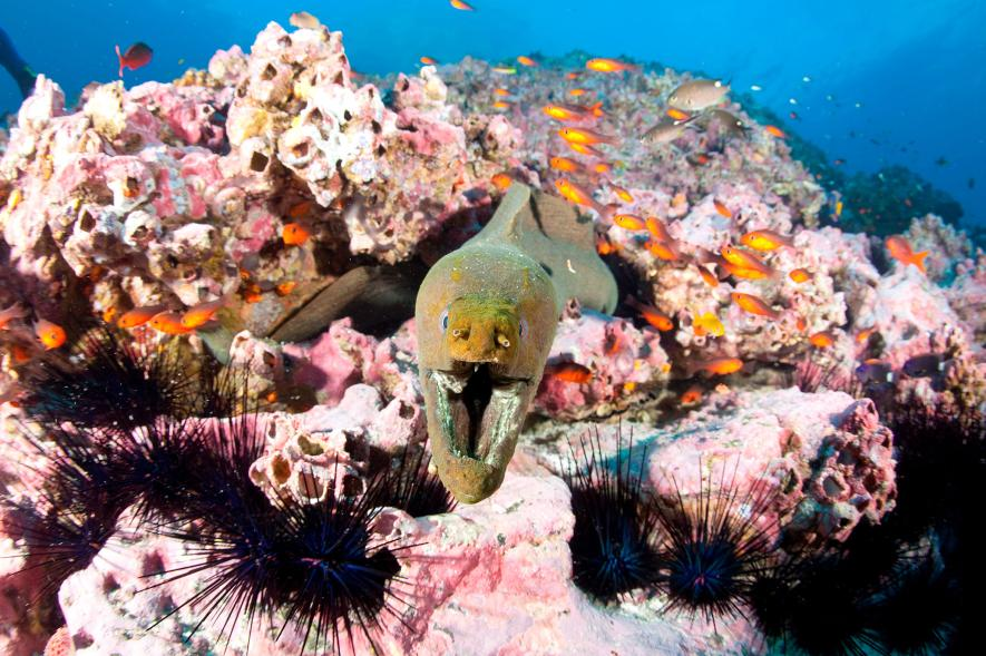 The waters off Malpelo Island, a World Heritage Site in the Eastern Pacific west of Colombia, contain a colorful confluence of marine life, including this green moray. (Photo by: Banfi Franco/AGF/UIG via Getty Images)