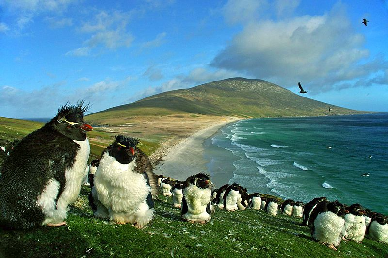 Saunders Island with Southern Rockhopper Penguins. Photo Ben Tubby - flickr.com