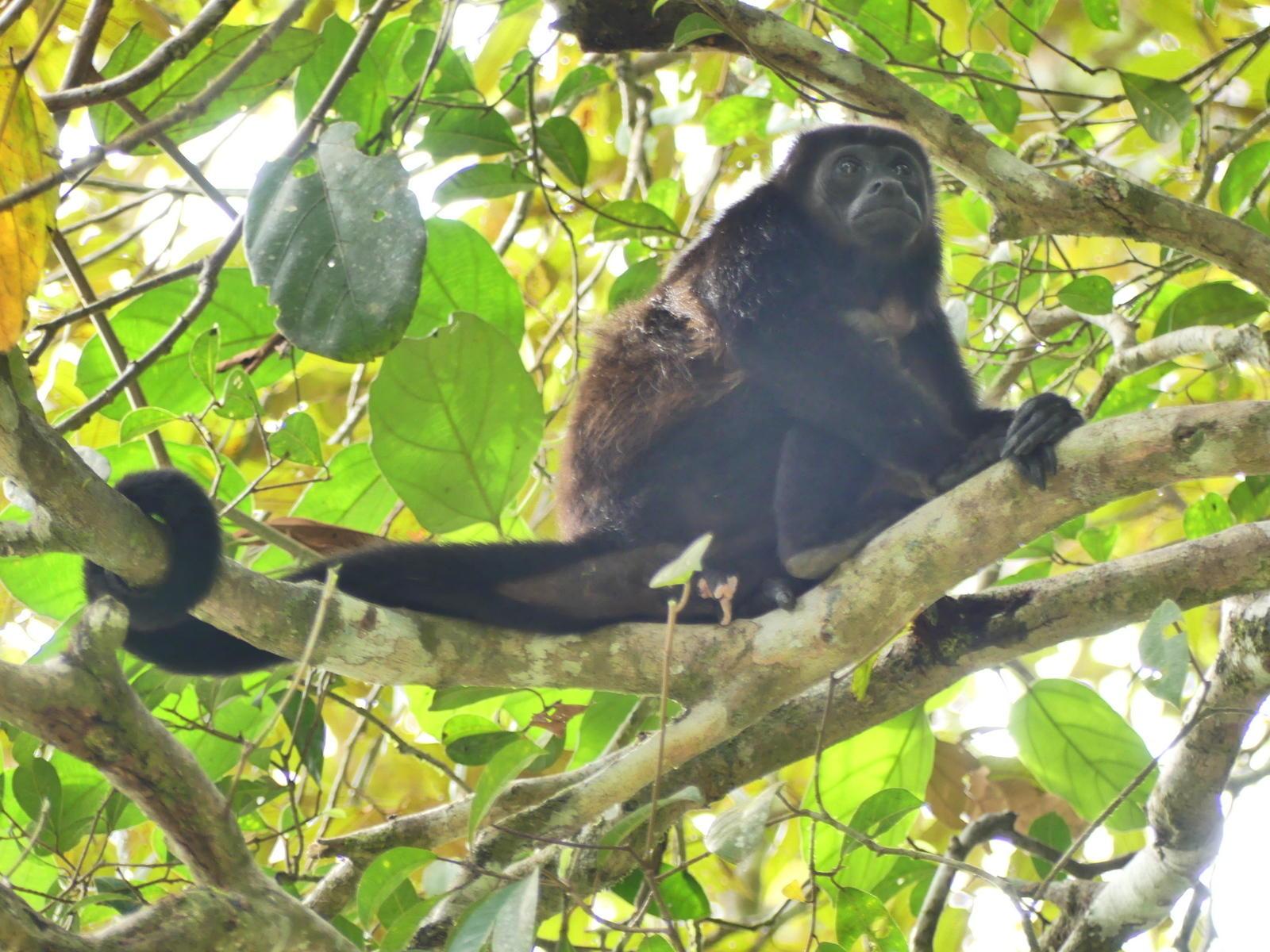 U.S. helping investigate Costa Rica plane crash